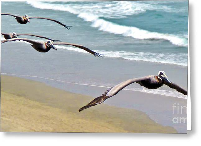 Pelican Fly-by Greeting Card