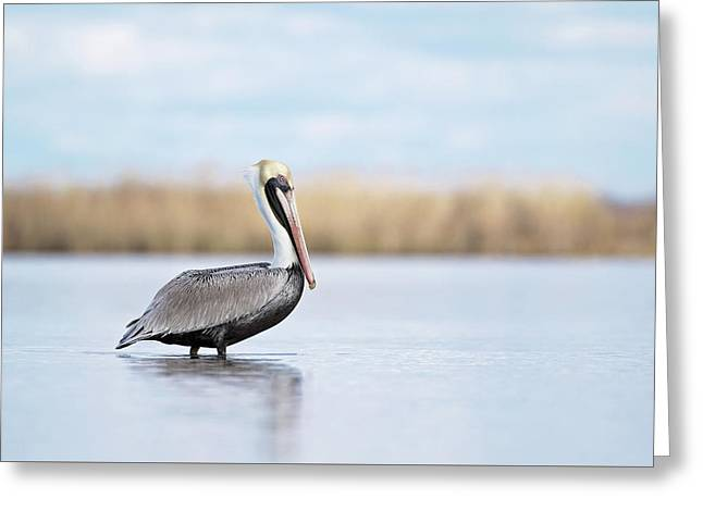 Pelican In Paradise Greeting Card