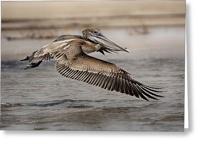 Pelican In The Air Greeting Card