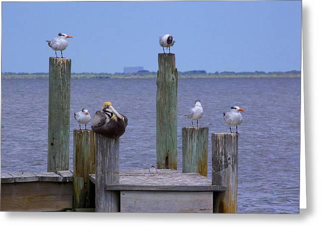 Pelican Incognito Greeting Card