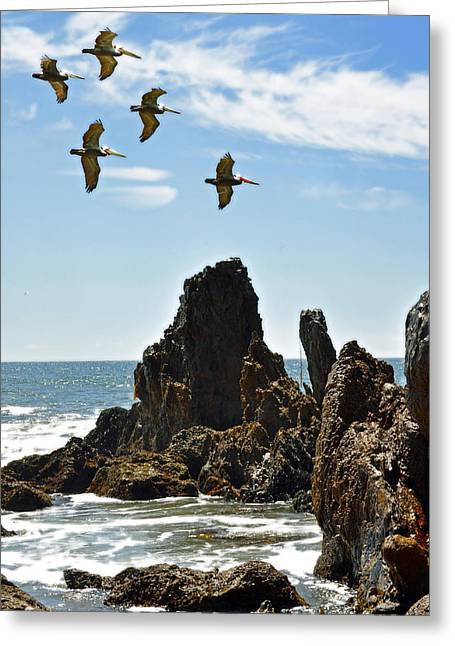 Pelican Inspiration Greeting Card by Gwyn Newcombe