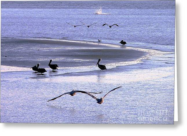 Pelican Island Greeting Card by Al Powell Photography USA