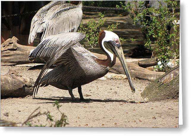 Pelican Island Greeting Card