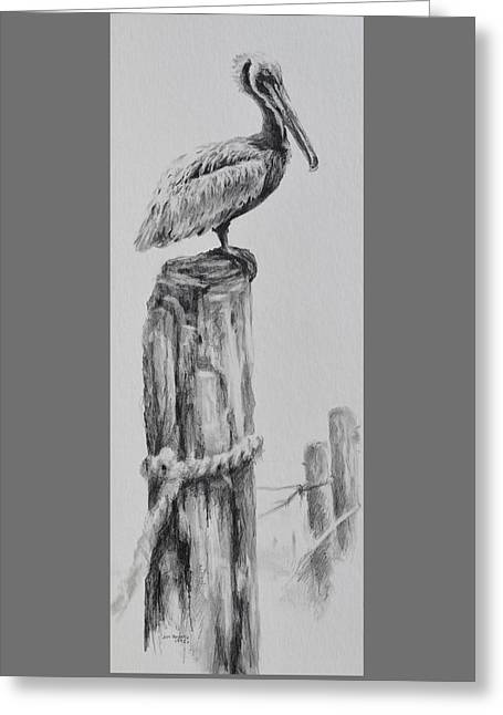 Pelican Greeting Card by Jim Young