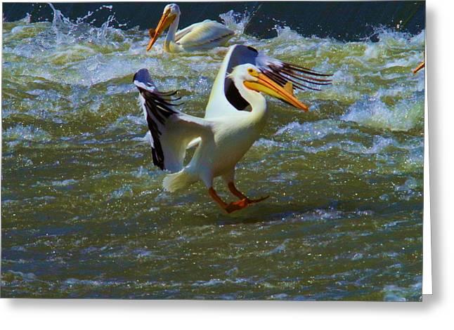 Pelican Landing Greeting Card by Jeff Swan