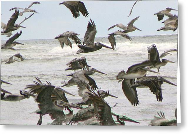 Greeting Card featuring the photograph Pelican Migration  by Pamela Patch