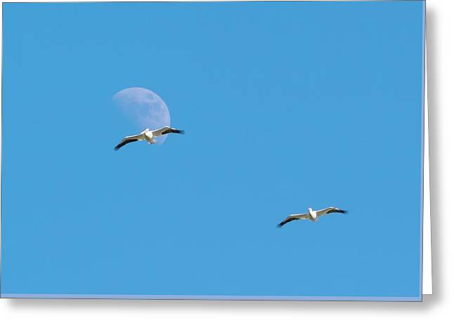 Pelican Moon Greeting Card