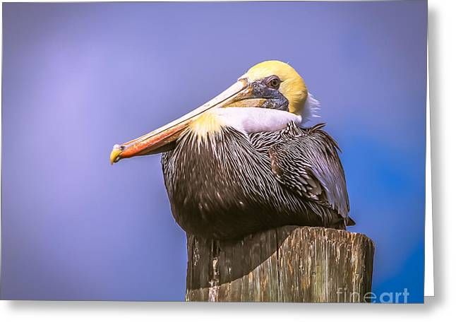 Pelican On Break Greeting Card