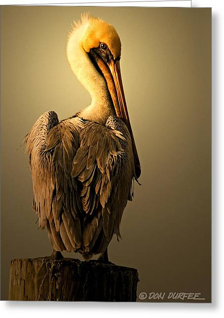 Greeting Card featuring the photograph Pelican On Piling by Don Durfee