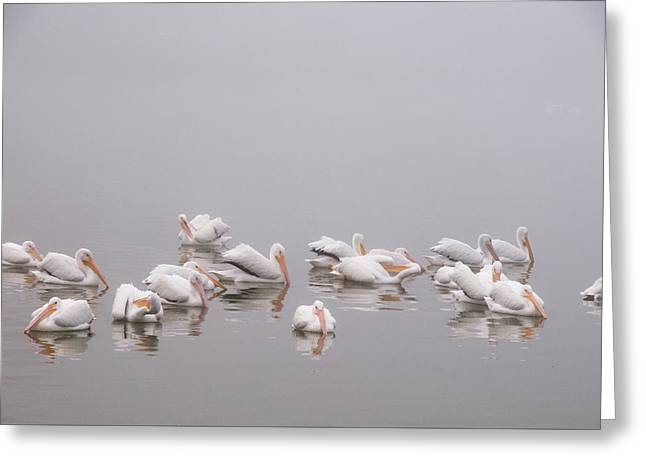Greeting Card featuring the photograph Pelicans On The Lake by Carolyn Dalessandro