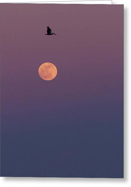 Pelican Over The Moon Greeting Card