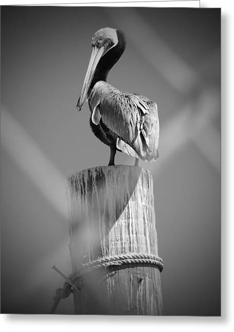 Pelican Perched Greeting Card by Megan Verzoni
