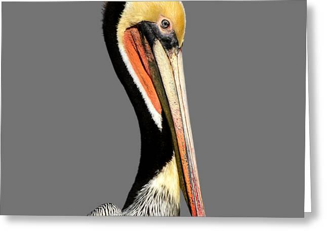 Pelican Posing Greeting Card