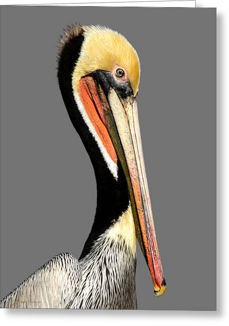 Pelican Posing Greeting Card