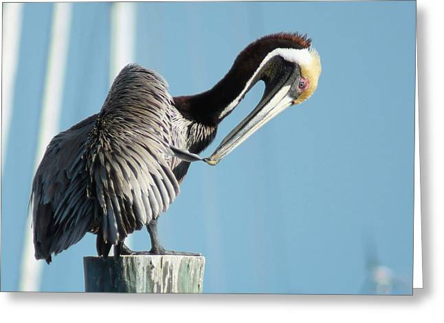 Greeting Card featuring the photograph Pelican Preen by Lynda Dawson-Youngclaus
