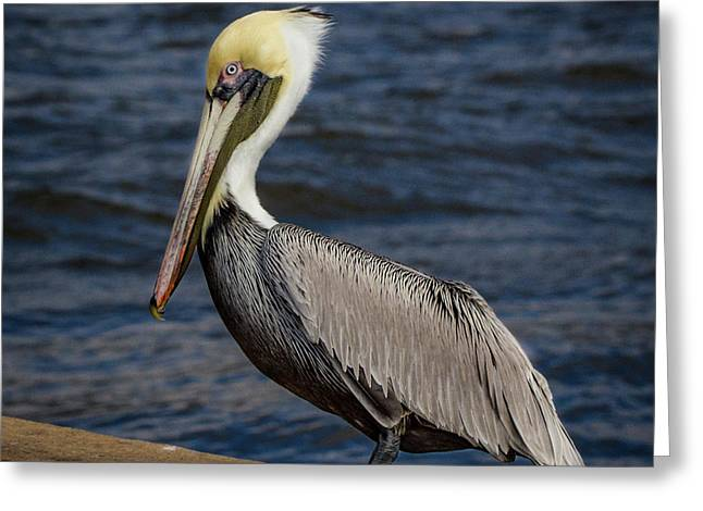 Pelican Profile 2 Greeting Card by Jean Noren