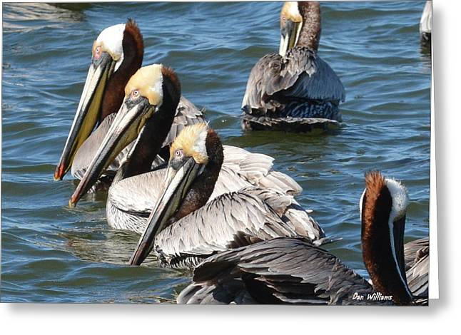 Pelican Profiles Greeting Card