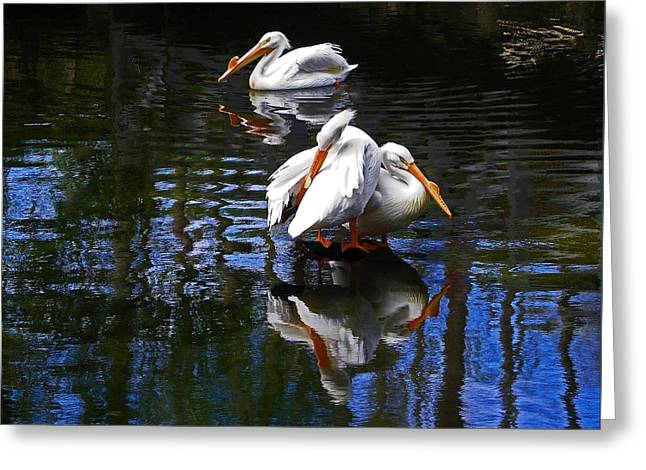 Pelican Reflections Greeting Card