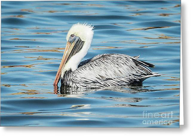 Pelican Relaxing Greeting Card by Scott and Dixie Wiley