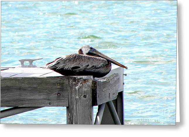 Greeting Card featuring the photograph Pelican Resting by Terri Mills