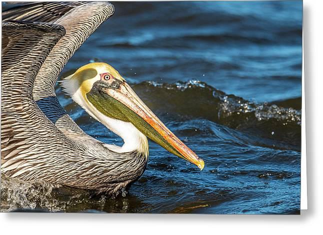 Pelican Side Portrait Greeting Card