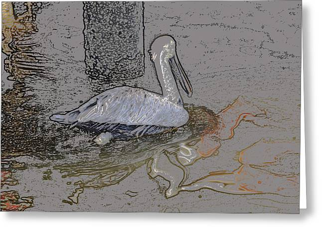Pelican Swim IIi Color Pencil Greeting Card