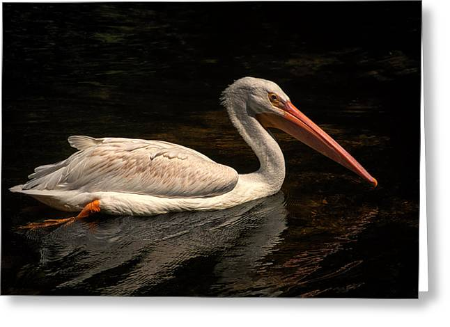 Pelican Swimming In Salisbury Greeting Card
