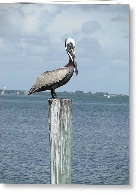 Pelican Greeting Card by Trisha Dahm