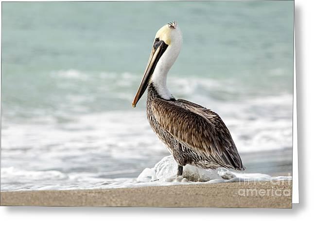 Pelican Waves Greeting Card