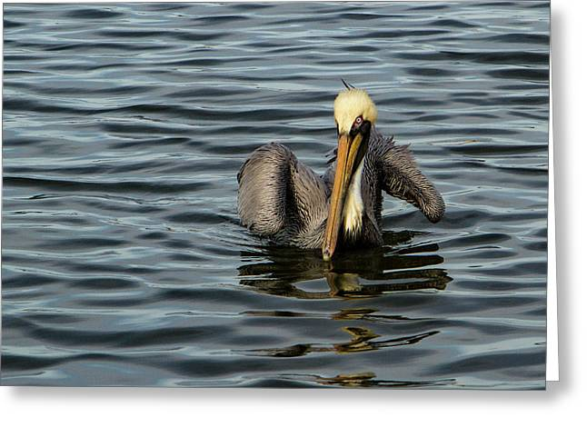 Greeting Card featuring the photograph Pelican Wing In A  Twist by Jean Noren