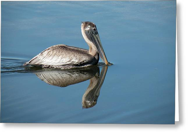 Pelican With Reflection Greeting Card by Rosalie Scanlon