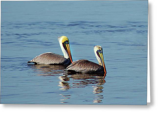 Pelicans 2 Together Greeting Card