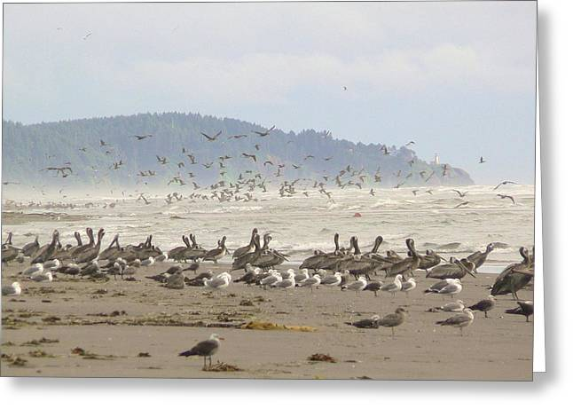 Greeting Card featuring the photograph Pelicans And Gulls by Pamela Patch