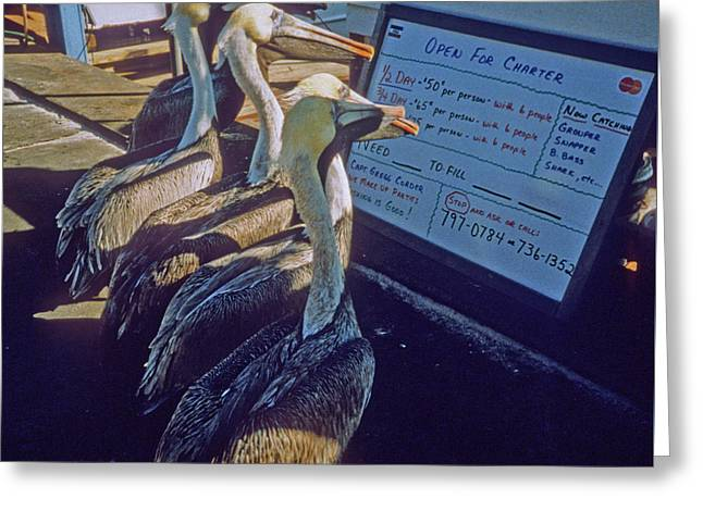 Pelicans And The Menu Greeting Card