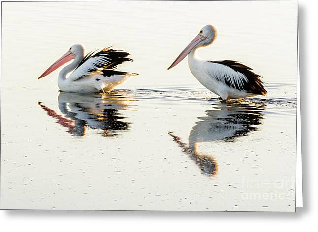 Pelicans At Dusk Greeting Card by Werner Padarin