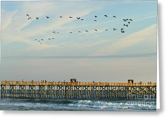 Pelicans At Flagler Beach Greeting Card