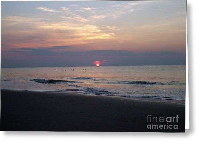 Pelicans At Sunrise On Tybee  Greeting Card
