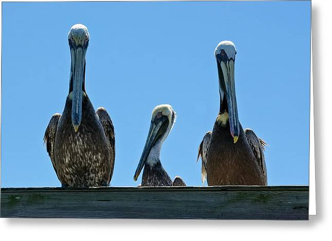 Pelicans At The Kure Beach Fishing Pier 2006 Greeting Card