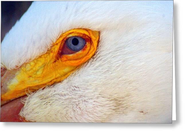 Pelican's Eye Greeting Card by Marty Koch