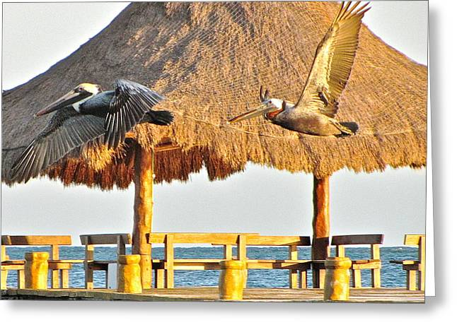 Pelicans In Flight Greeting Card by Sean Griffin