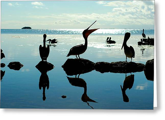 Pelicans Key West Greeting Card by Tim DeMasters