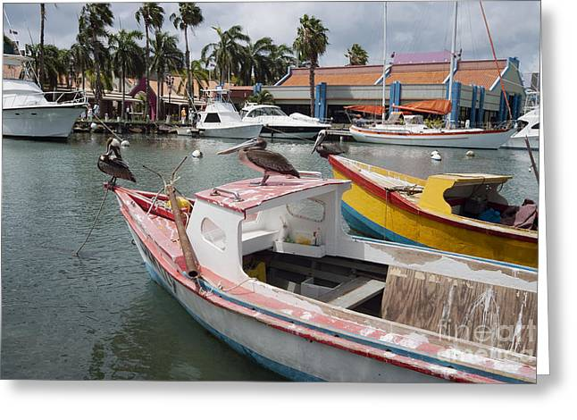 Pelicans On A Small Fishing Boat At Oranjestad Harbor, Aruba, Caribbean Islands Greeting Card by Dani Prints and Images