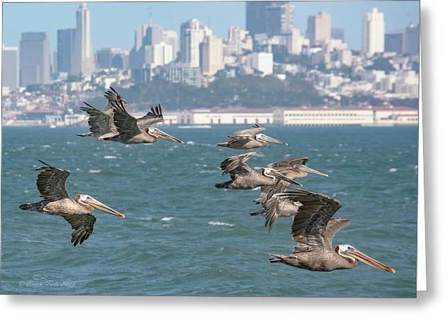 Pelicans Over San Francisco Bay Greeting Card