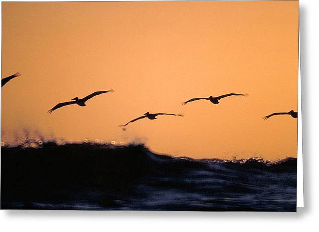 Pelicans Over The Pacific Greeting Card by Michael Mogensen