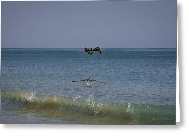 Pelican's Show Over The Ocean Greeting Card