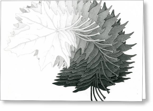 Pencil Drawing Of Maple Leaves Greeting Card