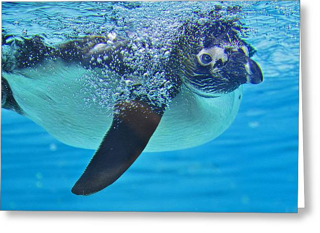 Penguin Dive Greeting Card