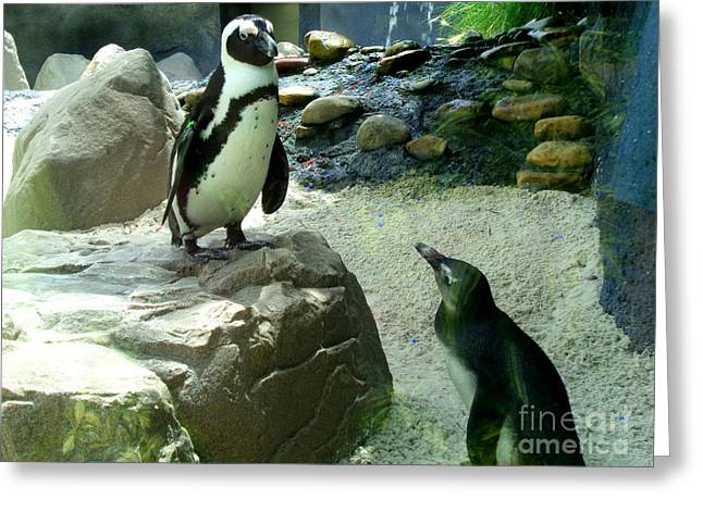Penguin Friends Greeting Card