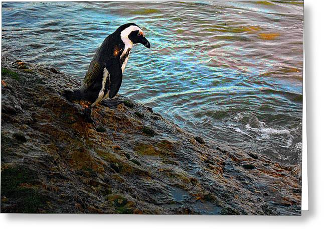 Penguin Going For A Dip Greeting Card by Michael Durst