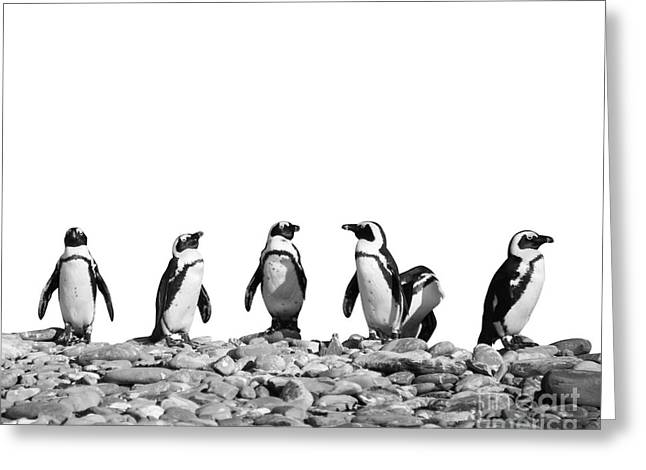 Penguins Greeting Card by Delphimages Photo Creations